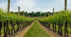 Providence Rhode Island Limo Van service to Newport Winery Wine Tours